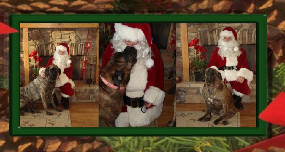Dog Christmas.sig