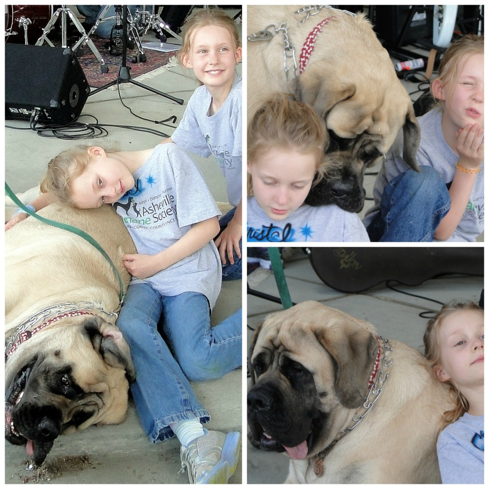 Brody stopped by the BMW fund raiser they were having for the Asheville Humane Society and met some new friends.