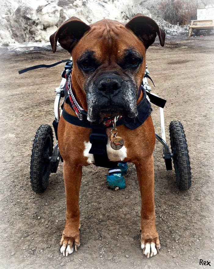 boxer-mountains-id-dog-tag